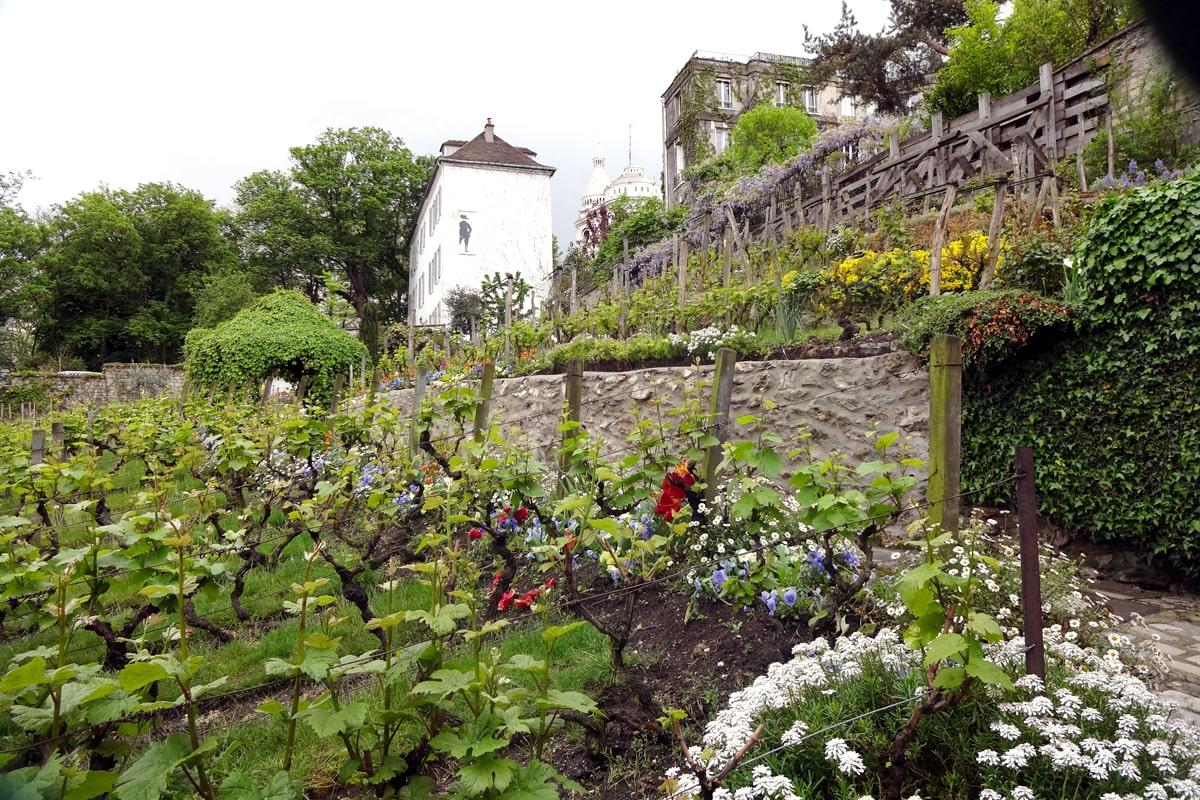Paris Montmartre Vignoble Vigne TheWaysBeyond